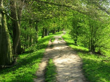 path_by_mrwootton-d62d1d4 Shrunk