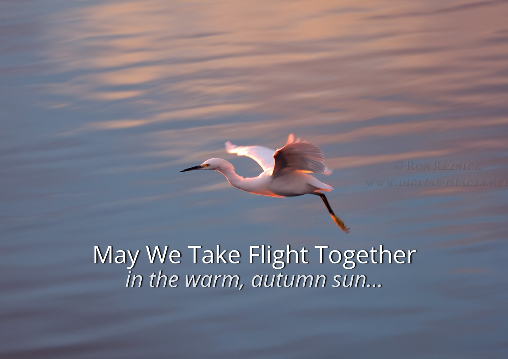 May We Take Flight Together